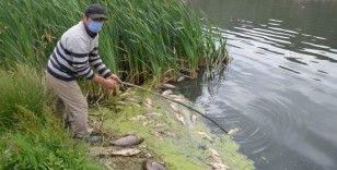 Bolu'da, su kirliliği yüzlerce balığı öldürdü