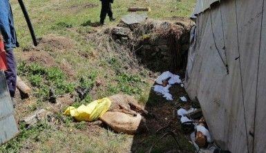 Aniden bastıran kar yağışı nedeniyle 50 koyun ve 30 kuzu telef oldu