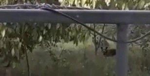 Evin bahçesine giren yavru ayılar telefonla görüntülendi