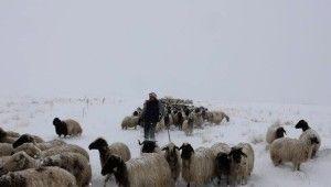 Hayvan yetiştiricilerine Mayıs ayında kar ve tipi sürprizi