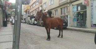 Bursa caddelerinde başı boş at paniği