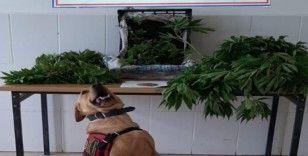 Çanakkale'de uyuşturucu operasyonu: 2 gözaltı