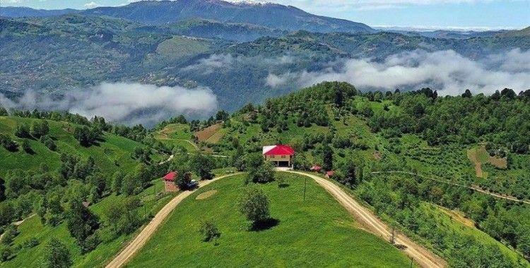 Doğu Karadeniz yaylaları ziyaretçilerini ağırlamaya hazırlanıyor