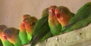 Sınırda 200 cennet papağanı yakalandı