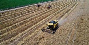 Adana'da buğday rekoltesi ve veriminde artış bekleniyor