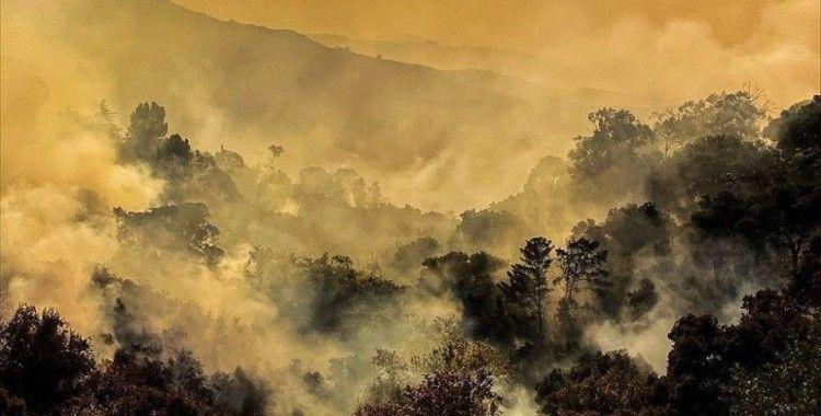 Dünyada 2019'da yaklaşık 12 milyon hektar ormanlık alan yok oldu
