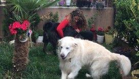 Oyuncu Gamze Topuz'un köpeklerine çivili kemik attılar