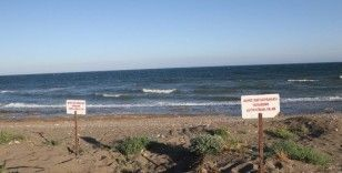 Deniz kaplumbağaları Mersin sahillerine yumurta bırakmaya başladı