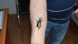 Antalya'da nesli tükenmekte olan geyik böceği bulundu