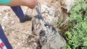 Sarnıca düşen kuzu 3 saatlik çalışmayla kurtarıldı