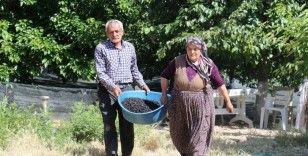 Şifa deposu karadutta hasat mevsimi