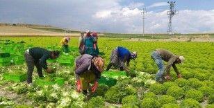 Mevsimlik tarım işçileri: Tarlada sosyal mesafe yok