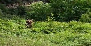 Yavru ayı telleri tırmanarak kaçtı