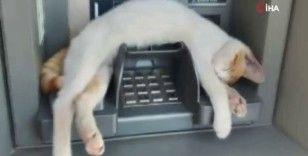 ATM'de uyuyan kedi görenleri gülümsetti