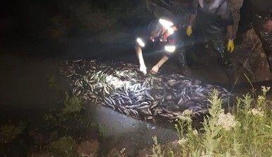 20 ton canlı inci kefali böyle kurtarıldı