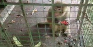 Oto galerideki maymunlar polis operasyonuyla kurtarıldı