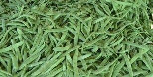 Haziranda fiyatı en fazla artan ürün taze fasulye, en çok düşen sarımsak