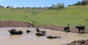 'Afrika'nın Savanası' değil Ordu