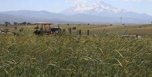 Türk tohumları 80 ülkenin tarım arazilerinde filizleniyor
