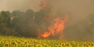 Çanakkale'deki poyraz orman yangınına müdahaleyi güçleştiriyor
