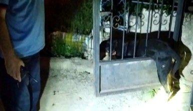 Nallıhan'da kapıya sıkışan köpeğe itfaiye seferberliği
