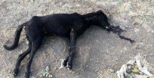 Mardin'de korkunç iddia: 10 köpek zehirlendi, 7'si öldü 3'ü tedavi altına alındı