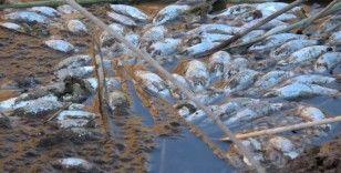 Delice ırmağında yüzlerce ölü balık kıyıya vurdu