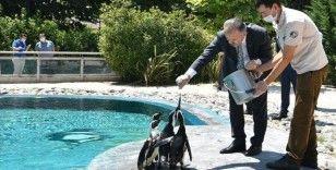 Bursa Hayvanat Bahçesi'nin nüfusu yeni doğumlarla artıyor