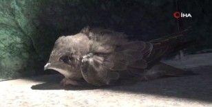 Taksim'de vatandaşlar yaralanan ebabil kuşu için seferber oldu