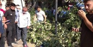 Üzerine ağaç düşen çocuk ölümden son anda kurtuldu