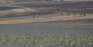 Reyhanlı Barajı göçmen kuşlara ev sahipliği yapıyor