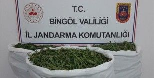Bingöl'de 40 kilogram esrar ve 806 bin kök Hint keneviri ele geçirildi