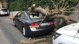 Park halindeki 2 aracın üzerine ağaç devrildi