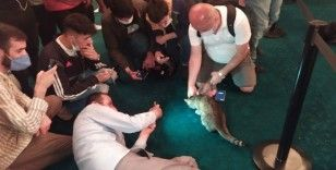 Ayasofya'nın dünyaca ünlü kedisi 'Gli' büyük ilgi görüyor