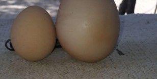 Yumurtanın içinden yumurta çıktı, vatandaş şaştı kaldı