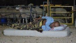 Kurbanlıklarla koyun koyuna nöbet