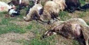 Yüksekova'da meraya yıldırım düştü, 17 koyun telef oldu
