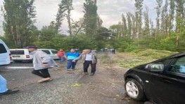 Kasırga onlarca ağacı kökünden söktü