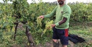 Iğdır'da etkili olan dolu birçok ekili alana zarar verdi