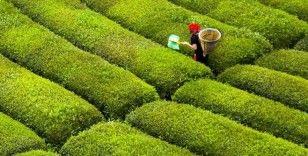 ÇAYKUR Kurban Bayramı'nın ilk günü çay almayacağını duyurdu