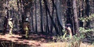 Aydos Ormanı'nda çıkan yangınla ilgili bir kişi gözaltına alındı