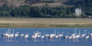 Van Gölü'nde flamingoların eşsiz dansı