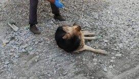 Hakkari'de zehirlenen köpekler tedavi altına alındı