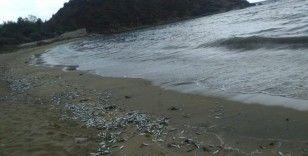 Yüzlerce ölü balık sahile vurdu