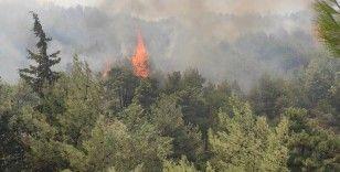 Hatay'daki yangın, rüzgarındaki etkisiyle ormanlık arazilere doğru ilerliyor