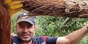 İçme su hattından 3 metrelik ağaç kökü çıktı