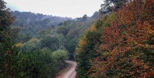 Sis bulutlarıyla kaplı Domaniç Dağları'nda sonbaharın ilk renkleri