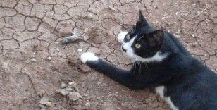 Kedinin fareyle oyunu kamerada