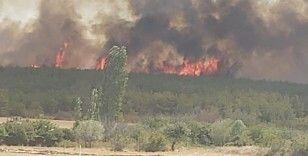 Tekirdağ'da orman yangını: Rüzgarın etkisiyle yangın Çanakkale'ye sıçradı