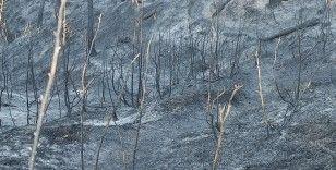 Hatay'daki orman yangını sonrası üzücü görüntüler